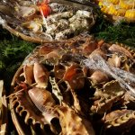 Part of the seafood spread