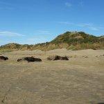 sealions at Cannible Bay