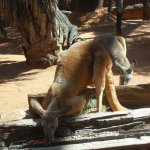 Photo of Wild Life Sydney Zoo