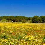 Abundance of wildflowers like no other place