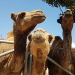 Photo of Camel Park