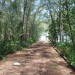 遊歩道がありジャングル内を散歩できますが、暑いです