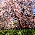 Photo de Ueno Park
