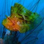 Foto de Aqua Dive Paradise