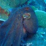 Foto di Aqua Dive Paradise