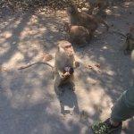feeding time for the wild monkeys