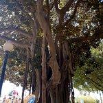 trees along the Explanada de Espana
