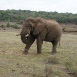 Photo de Schotia Tooth and Claw Safari