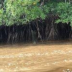 Photo of Commewijne River