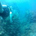 STUNNING marine life!