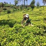 Photo de Heritance Tea Factory
