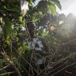 Organic Coffee Trees