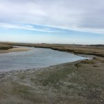 Water in the marshes