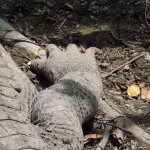 Photo de Tour the Glades - Private Wildlife Tours