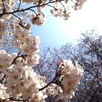 Photo de Kaiseiyama Park