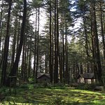 Photo de WildSpring Guest Habitat