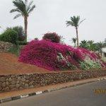cascate di fiori bellime