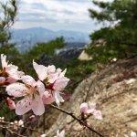 Cherry Blossoms on Inwangsan