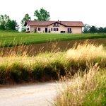 Tra prati e campi i grano