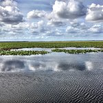 Photo of Wild Willy's Airboat Tours