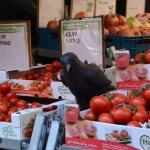 Photo de Albert Cuyp Market