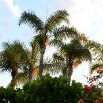 Over 90 different species of palms on site