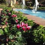 Central Garden Fountain