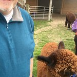 Me & Fab, the Alpaca I walked