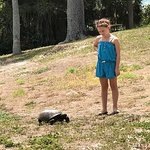 Turtles wander the island and kids feed them Hibiscus flowers