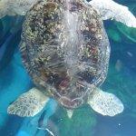 Photo of New England Aquarium