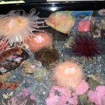tide pool at Alaska Sea Life Center