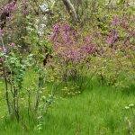 Trail near Chico Creek - early April