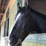 Photo of Le Cadre Noir