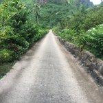 Photo of Moorea Tropical Garden