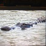 Photo of Garl's Coastal Kayaking Everglades