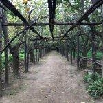 Foto di I Giardini di Cataldo