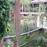 Photo de Han Rainforest Resort