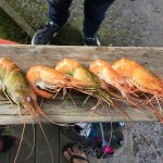 Photo de Huka Prawn Park
