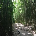 love the bamboo forest