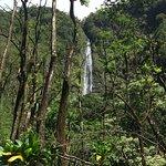 Waikomu falls