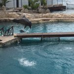 Photo of Dolphinaris Cozumel