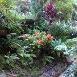 Lovely backyard gardens