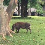 Foto di Elephant Hills Resort