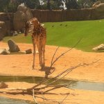 Photo of Bioparc Valencia