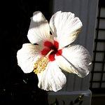 Foto de Magnolias Natura