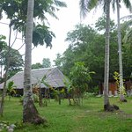 Coconut trees surround the longhouse & outhouse