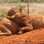 These adorable babies were playing in the dirt and stopped to give each other a hug