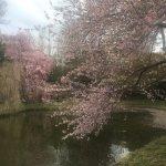 Foto de Brooklyn Botanic Garden