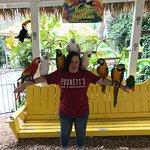 Loved the big birds