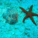 Sea Life, Crete